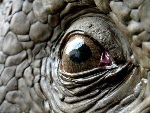 triceratopo 3d